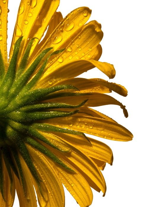 Picture of wet flower