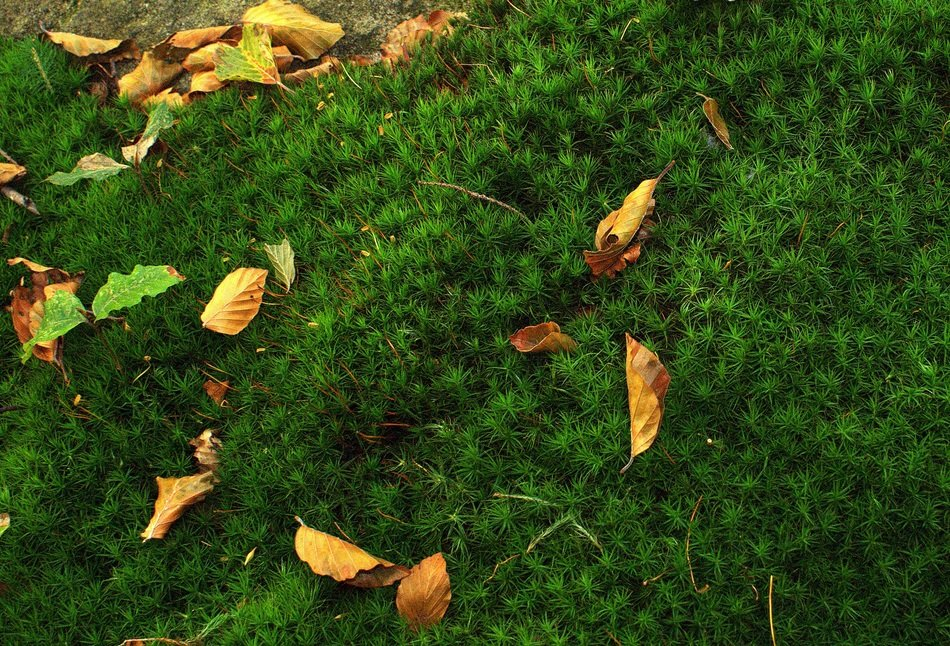 yellow brown leaves on green moss