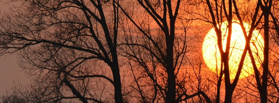fiery sun silhouettes of trees sunset