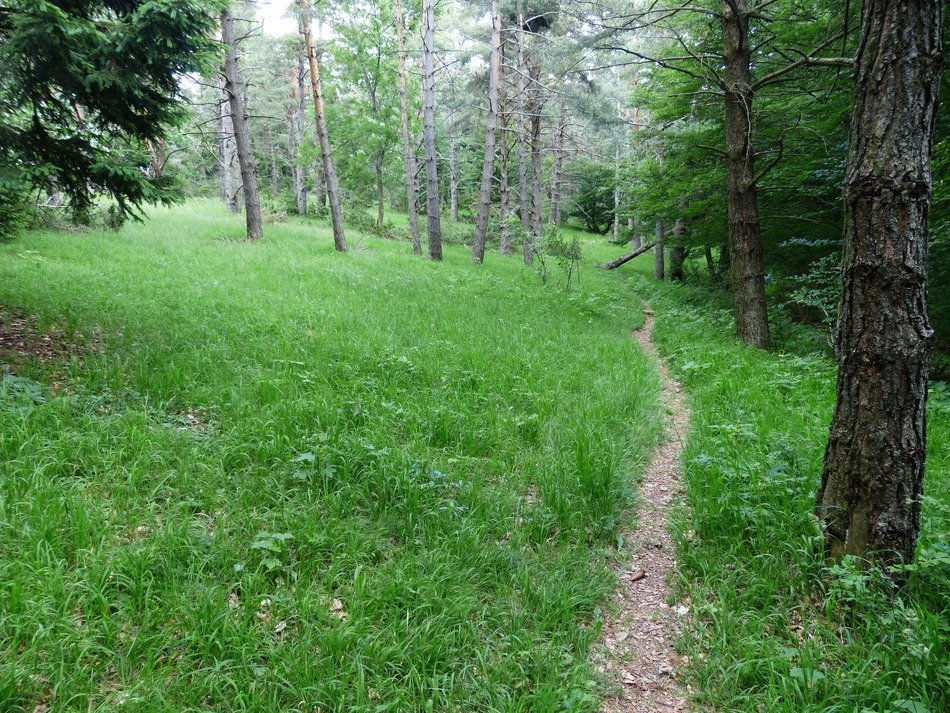 narrow path in the green forest