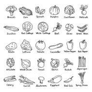Vector hand drawn vegetables