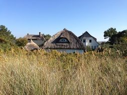 house with thatched roof landscape