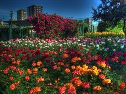 istanbul landscape colorful flowers garden