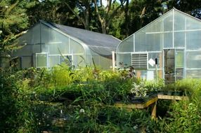 greenhouses in summer