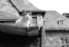 black and white picture of a homeless cat