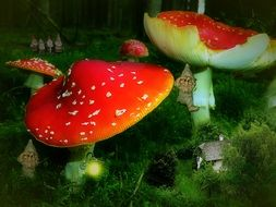 fly agaric amidst green grass