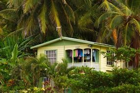 house among palm trees in the tropics