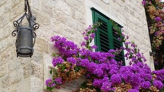 lantern and flowers at old town wall, croatia, split