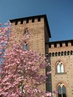 castle wall and blooming tree in Pavia, Italy