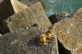 cat relax on the rock