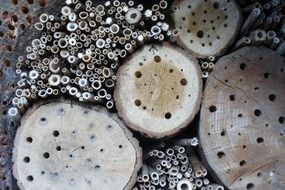 Insects in wood