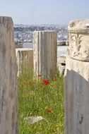 poppy on green grass among the ruined temple in Athens