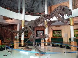 the large skeleton of a Tyrannosaurus Rex stands in a Museum