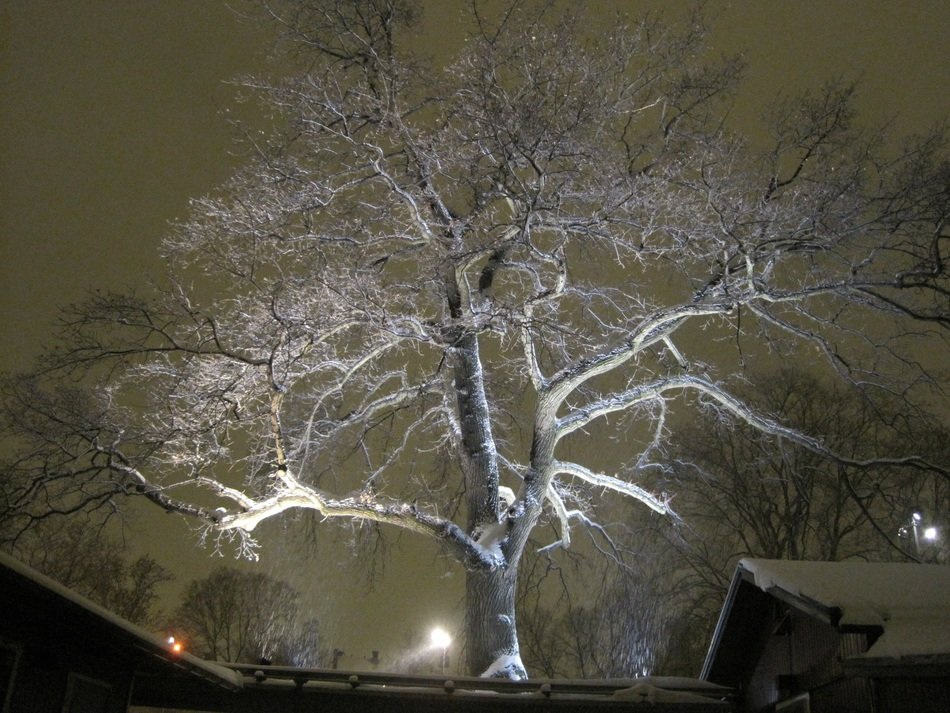 romantic winter tree light
