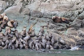seals on coastal rock