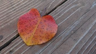 Bright autumn leaf on a wooden surface