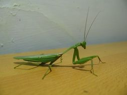 green mantis on a wooden surface close up