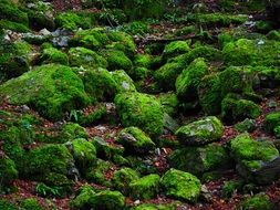 stones in thickets of green moss