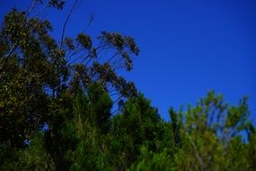 forest scrub green tree sky view