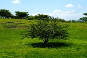 thick tree on a green meadow