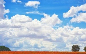 red poppy field landscape white cloud view