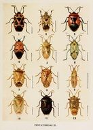 drawing of different types of beetles