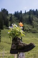 a bouquet of flowers in a boot
