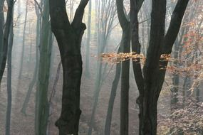 black tree trunks in the autumn forest