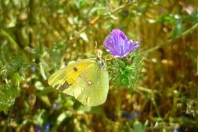 yellow butterfly on a small purple flower
