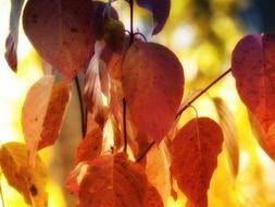 Bright autumn foliage closeup