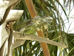 Green lizard sitting on a tree