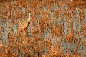A bird is standing in a swamp