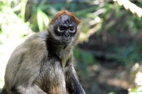 cute monkey animal wildlife portrait