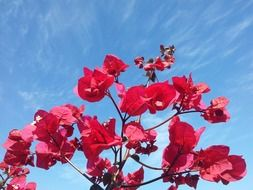 flowers in the blue sky