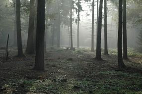 foggy in a forest