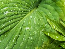 green juicy leaf after rain