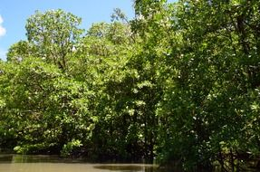 river with mangrove jungle in palawan