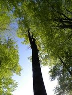 tall trees at forest, bottom view