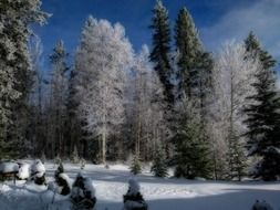 Picturesque snow-covered forest