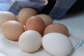 Brown and white chicken fresh eggs