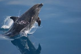 the bottlenose dolphin jump out of the water