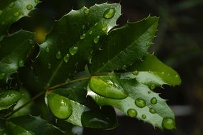 foliage plants in raindrops
