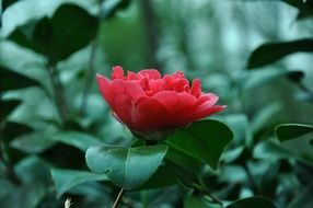 wonderful red flower