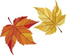 two maple autumn leaves as a graphic image