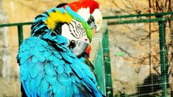 picture of the exotic parrots