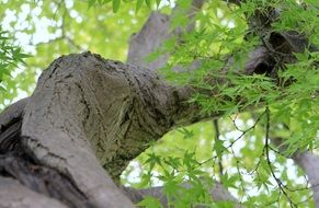 tree trunk with green twigs