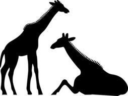 black silhouettes of giraffes on a white background