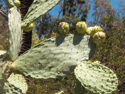 A huge cactus close up