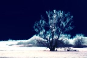surreal landscape with tree