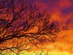 tree branches against the orange sky